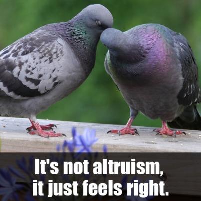 altruism1-meme